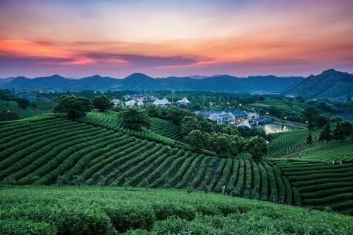 康师傅乌龙茶引爆新热度,健康茶饮势必引领主流消费趋势