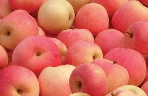 如何正确认识苹果的营养价值?专家来告诉你