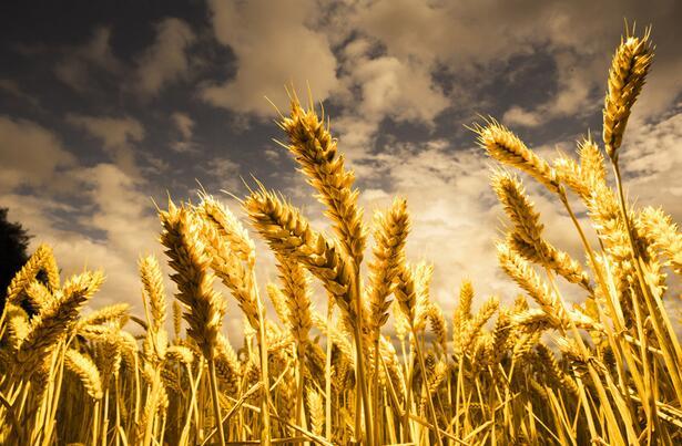 官方预测今年粮食产量预计是历史最高